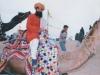 Camel Festival 11