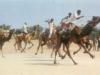 Camel Festival 5
