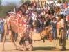 Camel Festival 7