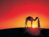 Camel Festival 9