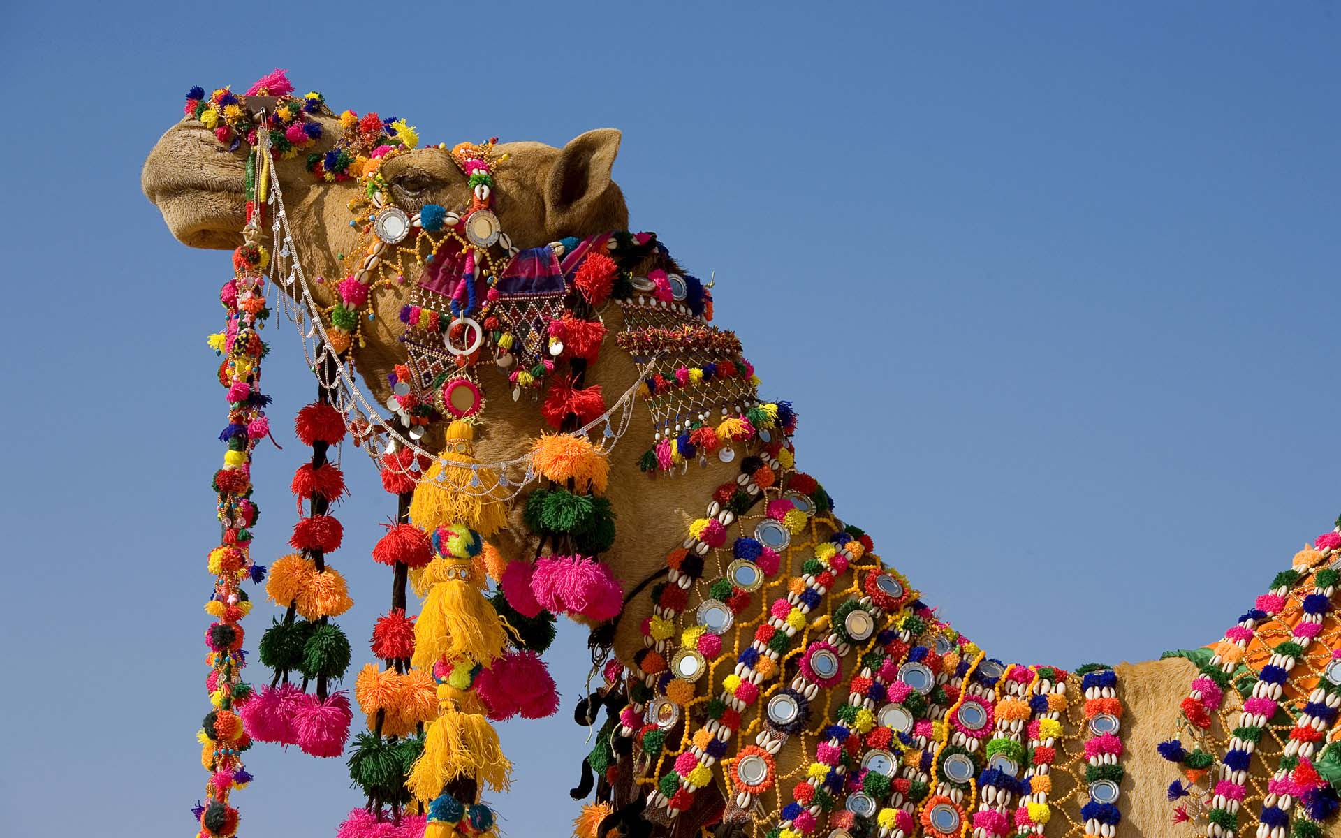 Camel Decoration